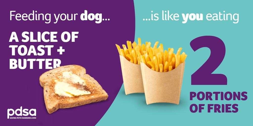 Scopri cosa dai da mangiare ai tuoi animali domestici.
