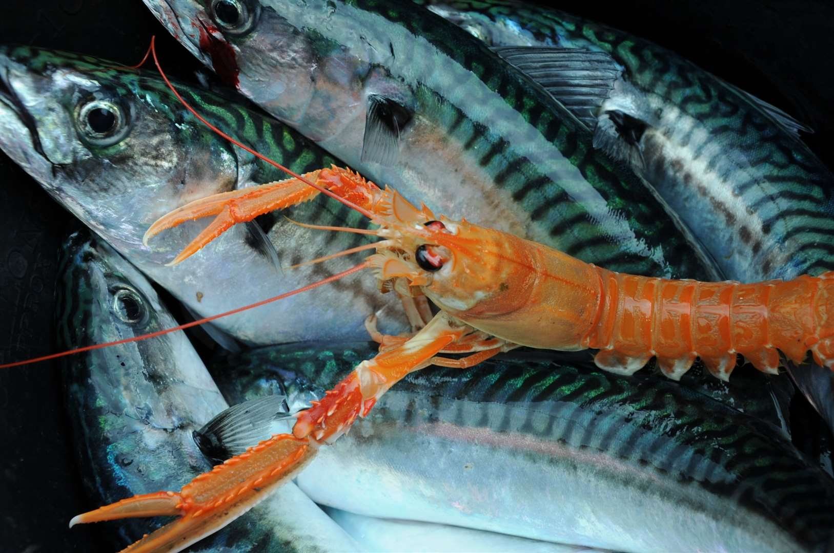 The Scottish seafood sector is reported to be losing £1 million a day.