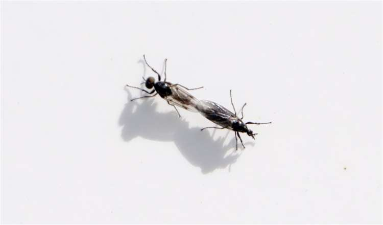 Plague of flies' descends on the county
