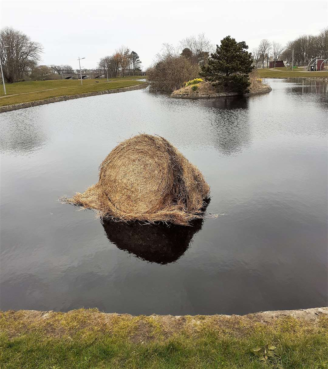 A barley straw bale sits in Thurso's boating pond. Picture: A Glasgow